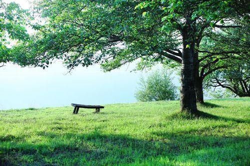 treechair.jpg